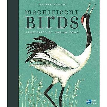 Magnifici uccelli (Studio Walker)