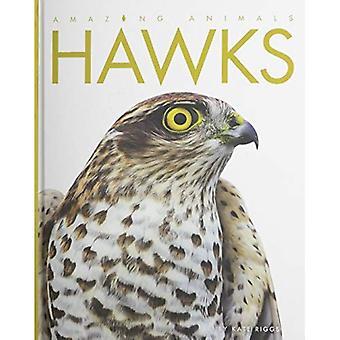 Amazing Animals Hawks