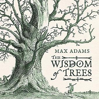 A sabedoria das árvores: uma miscelânea