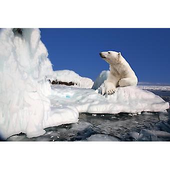 Tapete Wandbild Eisbär