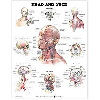 Head and Neck Anatomical Chart by Prepared for publication by Anatomical Chart Company