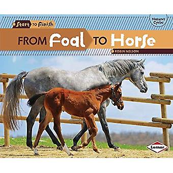 From Foal to Horse (Start to Finish, Second)