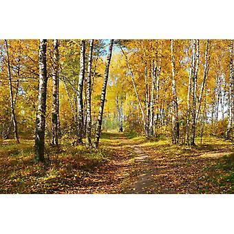 Wallpaper Mural Autumn Forest