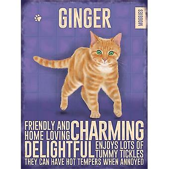 Medium Wall Plaque 200mm x 150mm - Ginger Cat by The Original Metal Sign Co