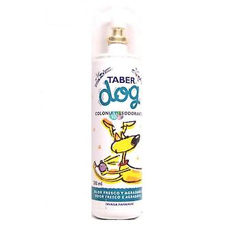 DFV Taberdog Cologne-Deodorant 200Ml (Dogs , Grooming & Wellbeing , Cologne)