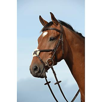 Collegiate Syntovia+ Padded Raised Figure 8 Bridle - Brown
