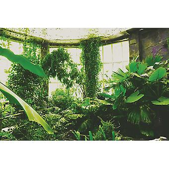 Tropical Plants in Greenhouse