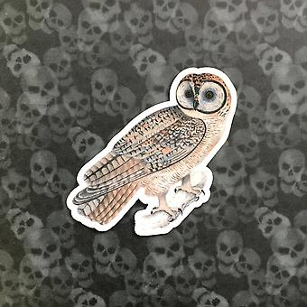 Owl Vinyl Sticker