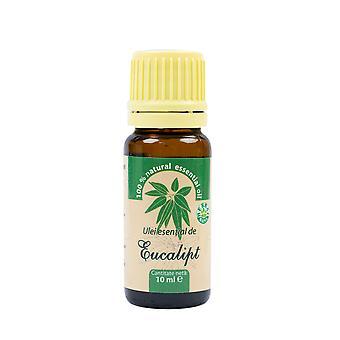 Eucalyptus ätherisches Öl (Eukalyptus globulus), 100% rein ohne Zugabe, 10 ml