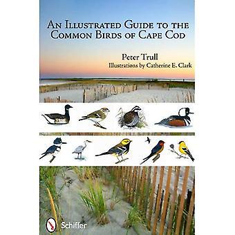 Un Guide illustré pour les oiseaux communs de Cape Cod