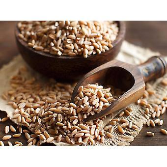 Mélange de crêpes de blé entier 5 grains -( 22 lb )