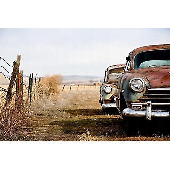Wallpaper Mural Vintage Rusting Cars
