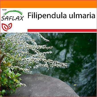 Saflax - Garten in der Tasche - 500 Samen - Meadowsweet - La reine des prés - Regina dei prati - Reina de los prados - Echtes Mädesüß