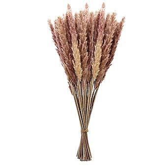 Bulrush Luonnolliset kuivatut kukat Pienet Pampas Grass keinotekoiset kasvit