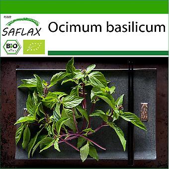 Saflax - 250 seeds - With soil - Organic - Basil Thai - BIO - Basilic - Thaï - BIO - Basilico tailandese - Ecológico - Albahaca tailandesa - BIO - Basilikum Thai