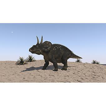 Triceratops gå över en karg landskap affisch Skriv