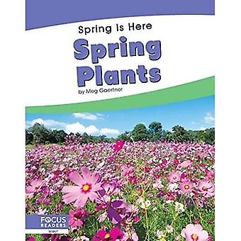 Spring Is Here: Spring Plants