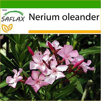 Saflax - 50 siementä - Maaperällä - Oleander - Oléandre - Oleandro - Oleandro - Oleander