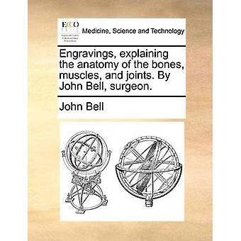Engravings - Explaining the Anatomy of the Bones - Muscles - and Join