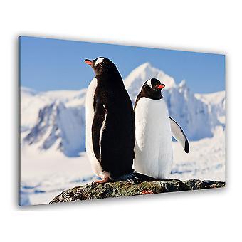 Fototafel Duo von Pinguine - 80x50 cm