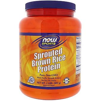 Sprouted Brown Rice Protein - Sin Sabor (907 gramos) - Now Foods