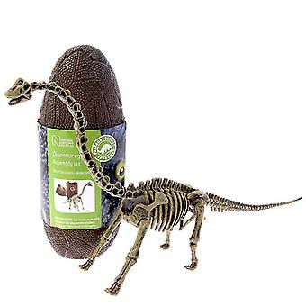 Brachiosaurus Model Skeleton 13 piece Construction Kit in a Dinosaur Egg
