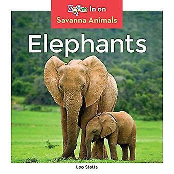 Éléphants (animaux de la savane)