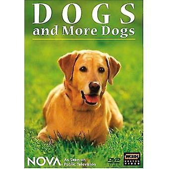Nova - Nova: Dogs & More Dogs [DVD] USA import