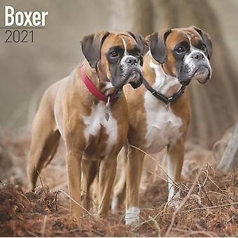 Boxer 2021 Wall Calendar by Created by Avonside Publishing Ltd