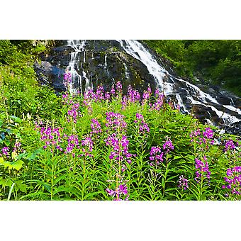 Scenic View Of Bridal Veil Falls With Fireweed In The Foreground In Keystone Canyon Of Southcentral Alaska PosterPrint