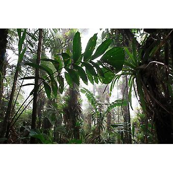 Bromeliad and tree fern at 1600 meters altitude in tropical rainforest Sierra Nevada de Santa Marta Poster Print by Cyril Ruoso