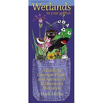Våtmarker i fickan: en Guide till vanliga växter och djur av Mellanvästern våtmarker