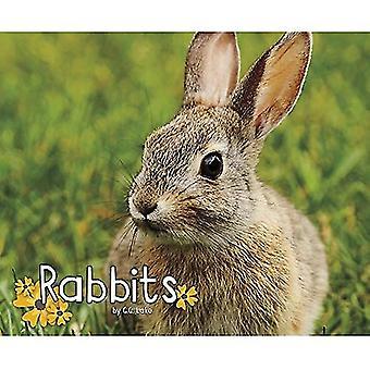 Kaninchen (Pebble Plus: Wald Wildtiere)