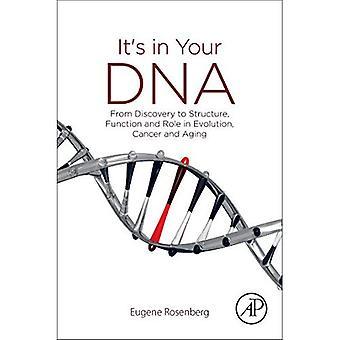 Es ist in eurer DNS: von der Entdeckung zur Struktur, Funktion und Rolle in der Evolution, Krebs und Altern