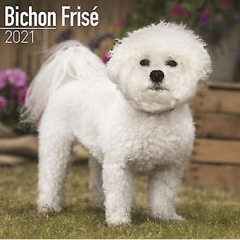 Bichon Frise 2021 Wall Calendar by Created by Avonside Publishing Ltd