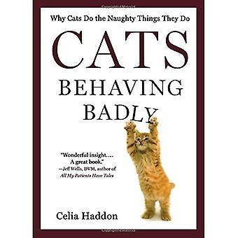 Katten Behaving Badly: Waarom katten doen het ondeugende dingen die ze doen
