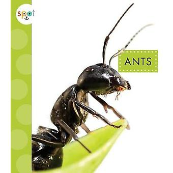 Ants by Nessa Black - 9781681511047 Book
