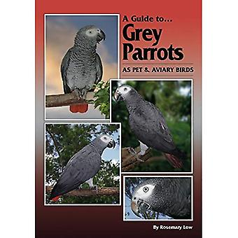 A Guide to Grey Parrots as Pet and Aviary Birds