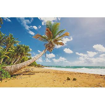 Taustakuva Seinämaalaus Flamenco Beach Puerto Ricossa (114707223)