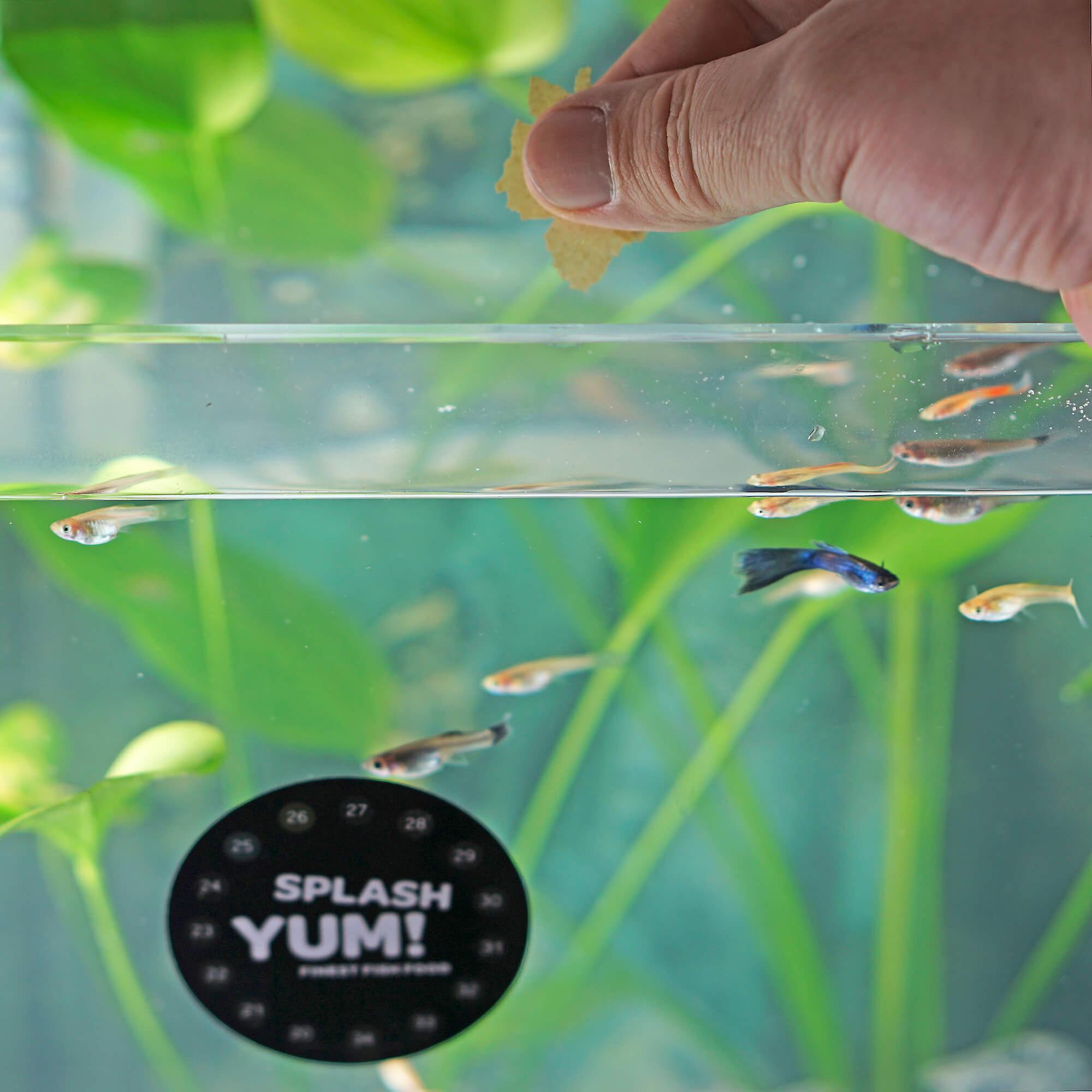 SplashYum! Flocken Fischfutter Aquarium Teich Hauptfutter alle Zierfische mit L-Carnitin, Lecithin, Folsäure Flockenfutter Flakes Leckerbissen für Diskus Wels Guppy Futter Platy Cichliden Malawi