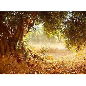 Wallpaper muurschildering oude olijfboom