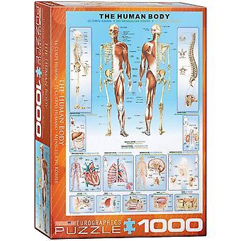 Eurographics - the human body
