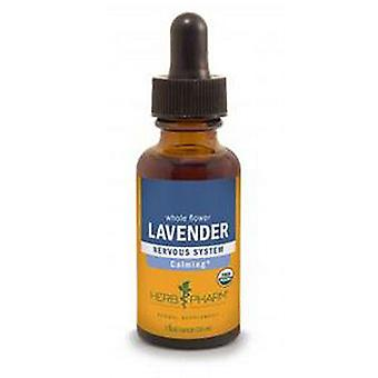 Kraut Pharm Lavendel Extrakt, 1 Oz