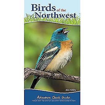 Ptaki północno-zachodniego