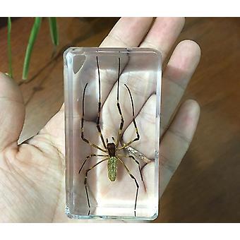 1 Piece Spider Specimen Tarantula In Clear Resin Educational Explore