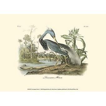Louisiana Heron Poster Print by John James Audubon (13 x 10)