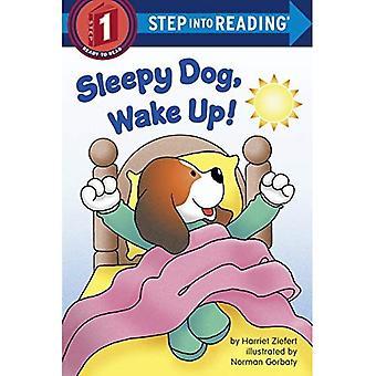 Cachorro com sono, acorda! (Entra leitura)