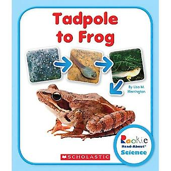 Kaulquappe zum Frosch (Rookie Read About Science)