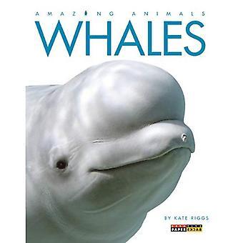 Valar (fantastiska djur (kreativ utbildning Paperback))