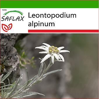 Saflax - 500 zaden - Met grond - Edelweiss - L'edelweiss - Stella alpina - Edelweiss - Edelweiss